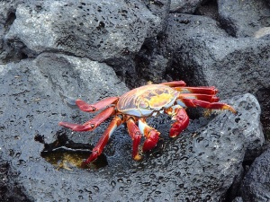 Wonderfully colored crabs
