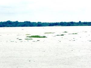 Guaya River