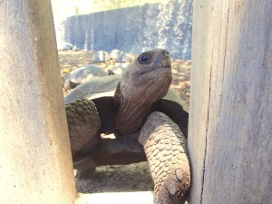 Curious little Tortoise