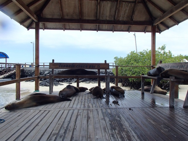 Lounging Sea Lions