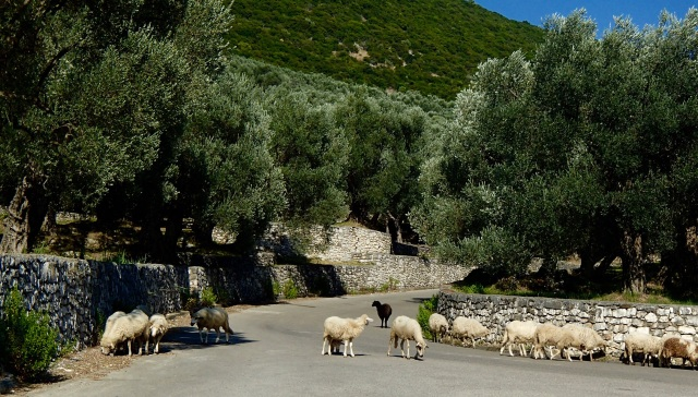 Locals hanging out in the olive groves outside Ulcinj.