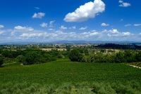 Olives, grapes sunflowers, wheat and the beautiful country town of Acquaviva