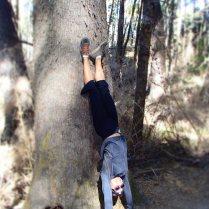 Bariloche_trees2